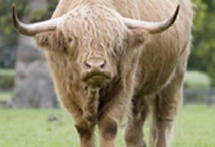 livestock_lg-420x288